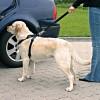 Cinto de Segurança e Peitoral Trixie p/ Cães - Tamanho L (70/90 cm)