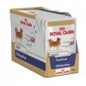 Royal Canin Chihuahua Adult, Cão, Húmidos, Adulto, Alimento