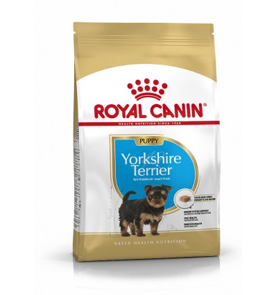 Royal Canin Yorkshire Terrier, cão, Seco, Júnior, Alimento/Ração