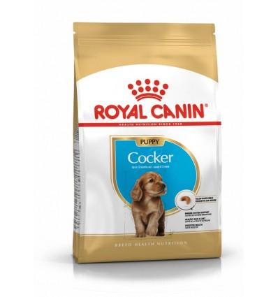 Royal Canin Cocker Puppy, Cão, Seco, Cachorro, Alimento/Ração