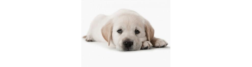 Puppies/Cachorro